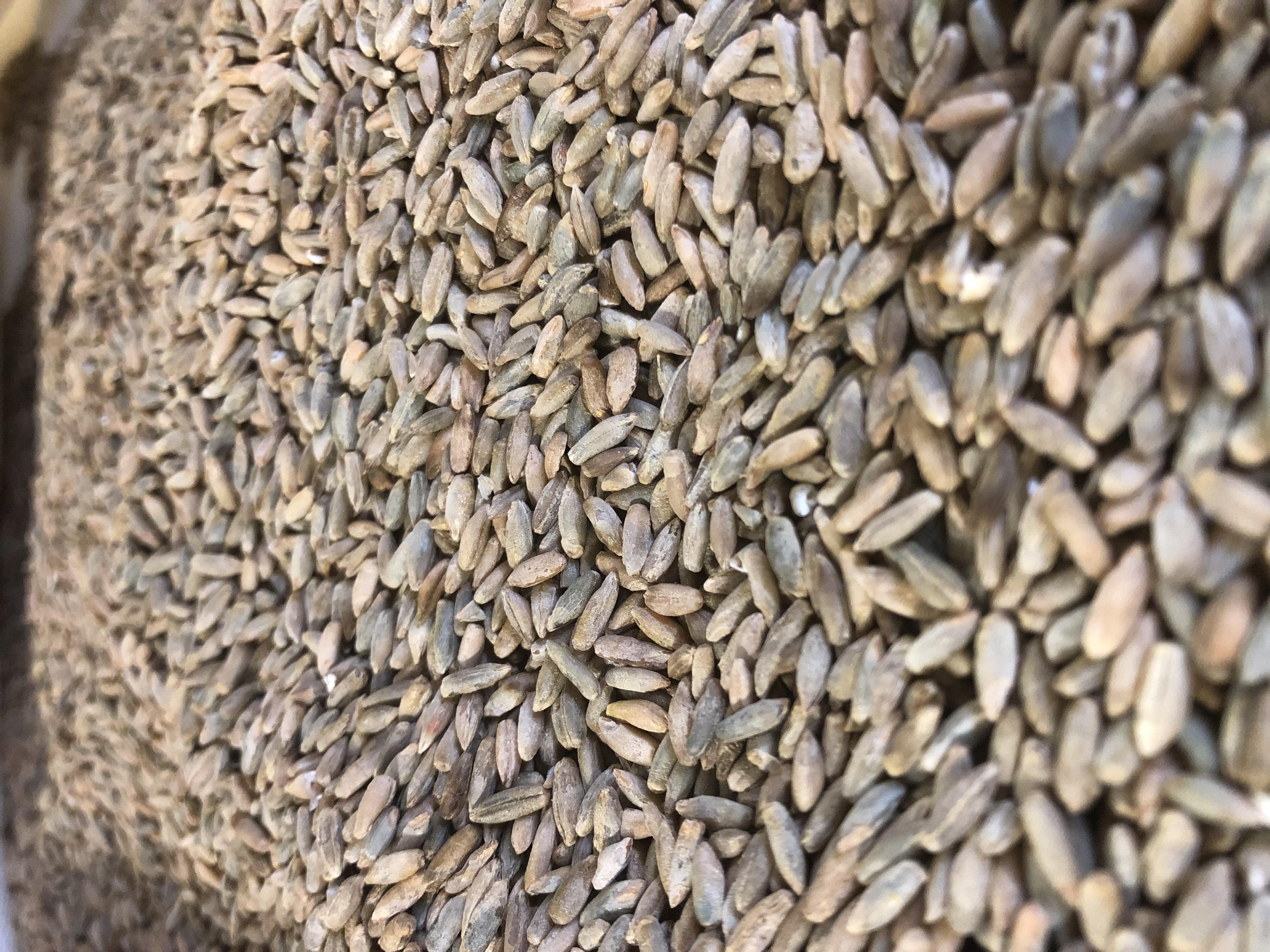 u.2.Cereal Rye.jpg