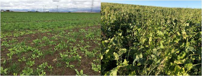 u.2.cover crops.JPG